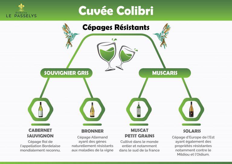 Cépages résistants de la cuvée Colibri Blanc